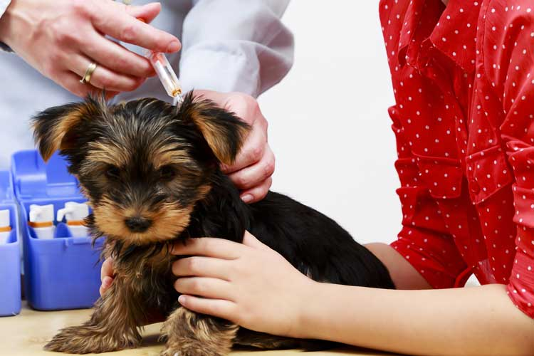 puppy vaccination
